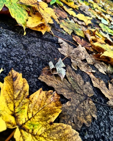leaves-ground-asphalt-autumn-fall