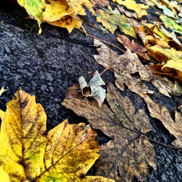 leaves-ground-asphalt-autumn-fall