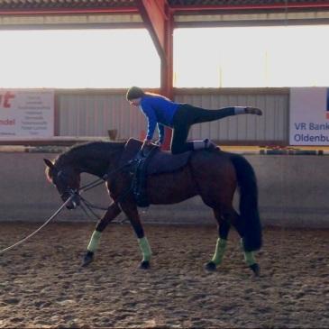 vaulting-horse-beginner
