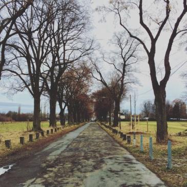 fechenheim-park-path-road-trees-frankfurt