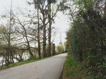 main-river-path-trees-frankfurt