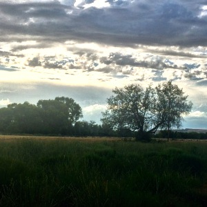 Lone Tree by the Columbia